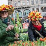 В Голландии начинается сезон тюльпанов