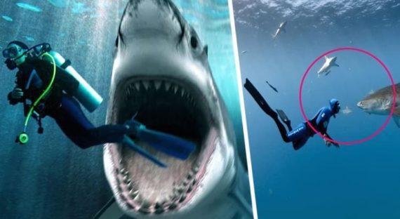 В Хургаду вернулась китовая акула: новости