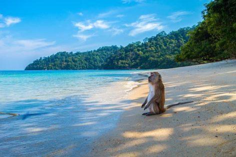 Лидеры туризма выпустили воззвание срочно открыть Таиланд для туристов