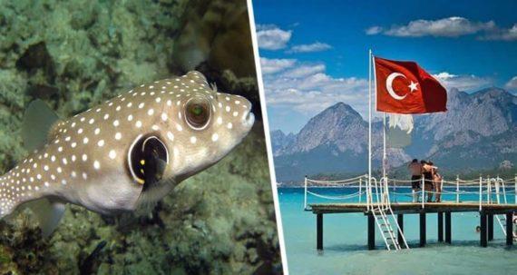 Казни египетские: нашествие ядовитых рыб на пляжи Анталии