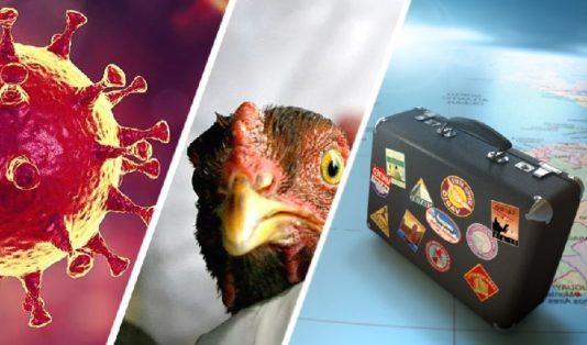 Для туризма прозвучал тревожный звонок: птичий грипп впервые перекинулся на людей