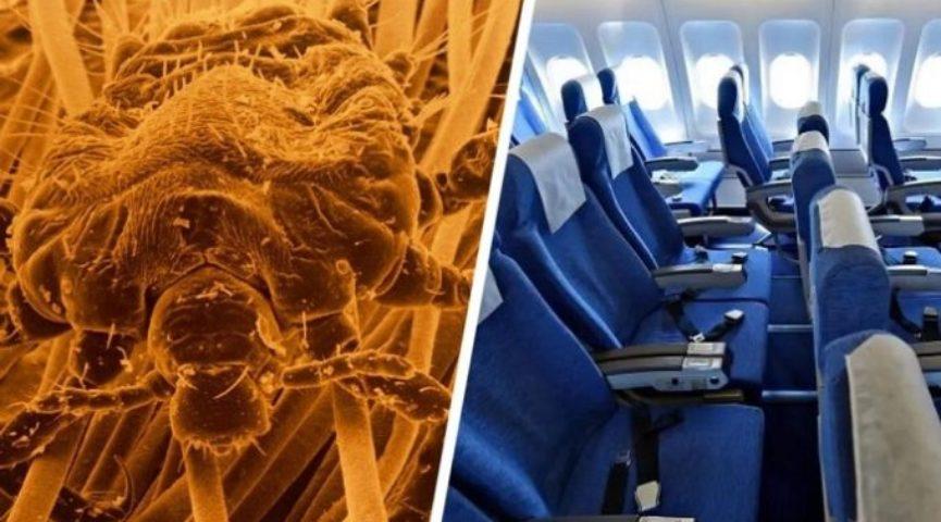 Туристов предупредили о риске заразиться вшами в самолёте