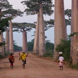О Мадагаскаре
